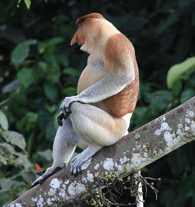Кто защищает и выбирает самых некрасивых животных в мире — Культура на FURFUR