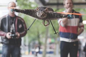 Художник превратил погибшего кота в квадролет на радиоуправлении — Культура на FURFUR
