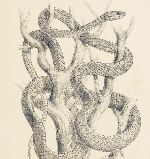Полный комплект: Что нужно, чтобы завести змею — Культура на FURFUR