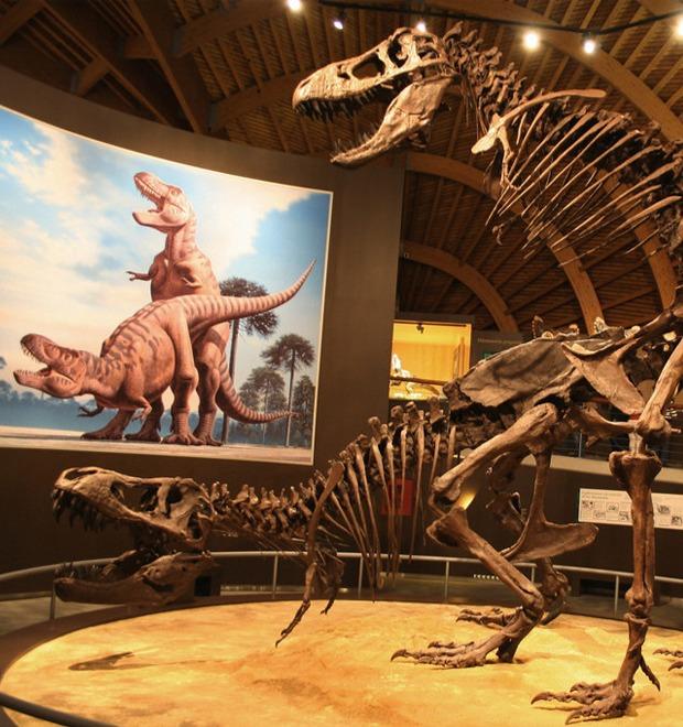 Вечная любовь: Американский палеонтолог рассказал о сексе динозавров — Культура на FURFUR