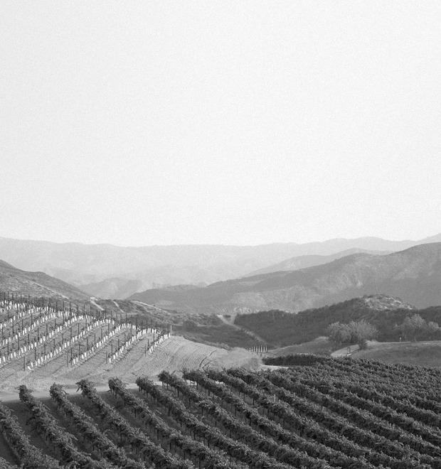 Вино Южной Америки в цифрах и фактах — Культура на FURFUR