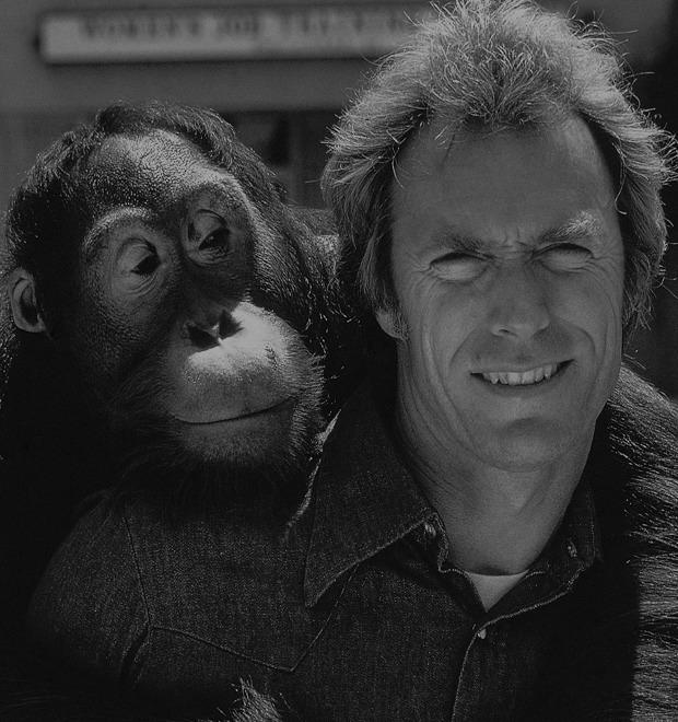 10 обезьян, ставших медийными персонами