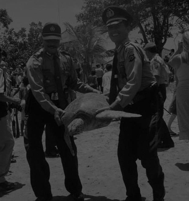 Животные вне закона: Как звери противостояли силам правопорядка — Культура на FURFUR