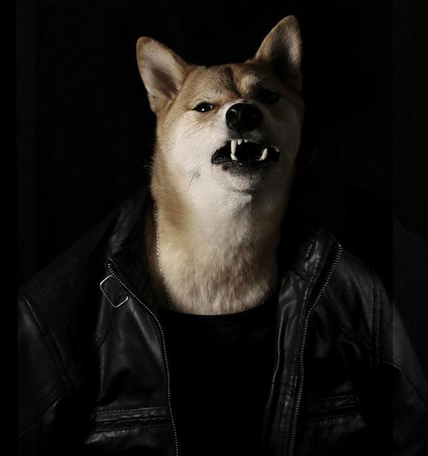 Как стильная собака стала зарабатывать больше тебя: История успеха menswear dog — Культура на FURFUR