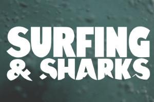 Фильм о взаимоотношениях серферов и акул — Культура на FURFUR