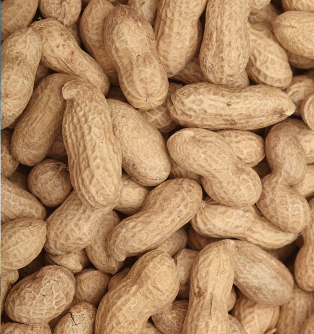 Путеводитель по арахисовой пасте, самому популярному продукту США — Культура на FURFUR
