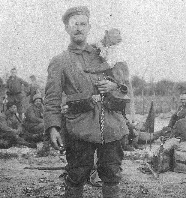 Как обезьяна-капрал, медвежонок-рядовой и другие животные помогали солдатам на войне — Герои на FURFUR