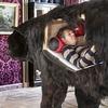 Художник из Франции прожил две недели в чучеле медведя