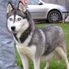 Пёс в «Жигулях» протаранил две иномарки