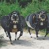 В США разработали четвероногого робота-мула для морской пехоты