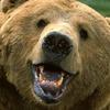 Житель Якутии зарезал ножом напавшего на него медведя