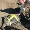 Австралийской свинье, укравшей пиво, собираются поставить памятник