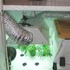 Бывший ученый из НАСА открыл школу по обучению выращиванию конопли