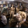 Студентки Колумбийского университета сняли ритуальное порно в библиотеке
