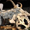 Во Флориде выставили на продажу мотоцикл из костей животных