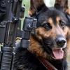Американские ученые создали пульт дистанционного управления для собак