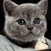 Художница поместила котов на обложки культовых рэп-альбомов