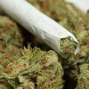 Штат Алабама готовится легализовать марихуану