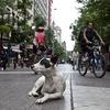 В Чили создан спецотряд из бездомных собак