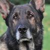 Полицейские научили собаку искать жёсткие диски с порно