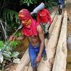 Индейцы Амазонии открыли охоту на браконьеров