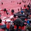 Активисты Anonymous развернули кампанию против убийства дельфинов в Японии