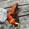 В США поймали двухцветного лобстера