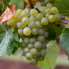 Вино Южной Америки в цифрах и фактах