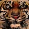 Тату-мастеры сделают татуировку в честь защиты животных