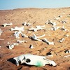 Жизни на Земле предстоит шестое массовое вымирание