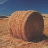 Деревенский житель украл полторы тонны сена для своей любимой девушки