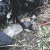 Чешская полиция арестовала кенгуру за ограбление магазина