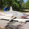 Житель Флориды поймал рекордно большую акулу, но съел ее до фиксации достижения