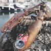 Огромный лобстер спасся от съедения благодаря преклонному возрасту