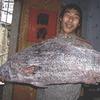 Китайский рыбак поймал рыбу из «Красной книги» ценой 473 тысячи долларов