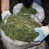 Женщина обменяла 3 кг марихуаны на подсолнечное масло