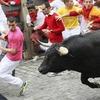 Британца оштрафовали на 3000 евро за селфи с бегущими быками