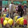 Овцы из Колумбии обыграли в футбол бразильских овечек