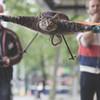 Художник превратил погибшего кота в квадролет на радиоуправлении