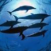 Боевой плавник: Как дельфины служили в российском флоте