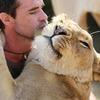 Львиную охоту сняли на видео «от первого лица»