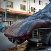 Китайский рыбак поймал редкую китовую акулу весом в 2 тонны
