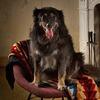 Ревизия пледов: Счастливого тебе Рождества, старый пёс