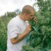 В США появились духи с ароматом марихуаны