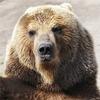 Пьяный медведь ограбил дом во Флориде