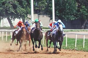 Полцарства за коня: Репортаж со скачек на московском ипподроме