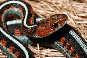 Полный комплект: Что нужно, чтобы завести змею