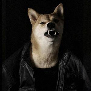 Как стильная собака стала зарабатывать больше тебя: История успеха menswear dog