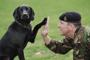 Противотанковые собаки, мышиные бомбы и другие животные на войне