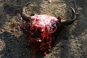 Бытовая жизнь работников бизоньего ранчо в США